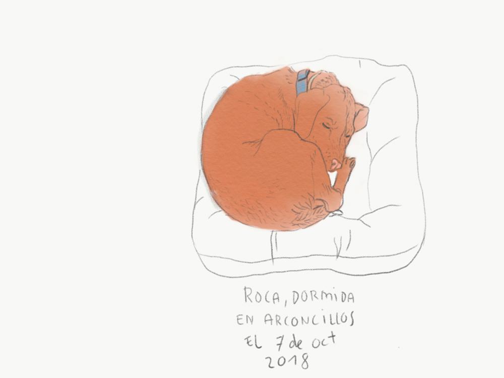 roca-01